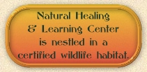 healing session usrrounded by nature