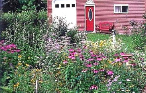 healing herbs in maine